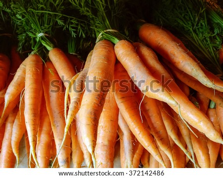 Bunches of fresh carrots from the summer garden. - stock photo
