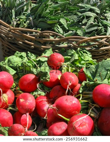 Bunches of fresh radishes on a farmers market table in the sunlight with a basket of garden sage in the background. - stock photo