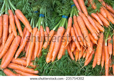 Bunches of freshly picked carrots - stock photo