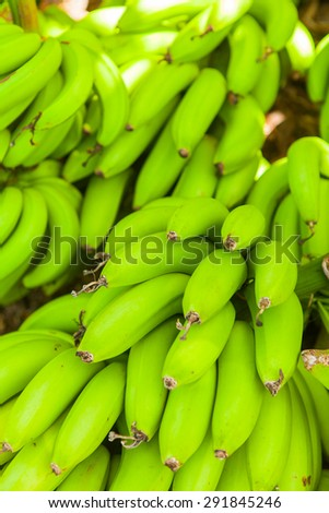 Bunches of green bananas in grocery shop