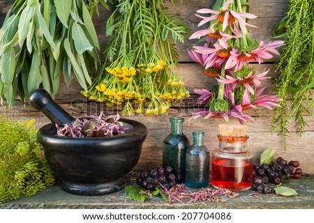 bunches of healing herbs on wall, herbal medicine - stock photo