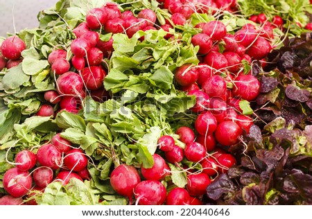 Bunches of red round radishes at the Farmer's market in Spain - stock photo