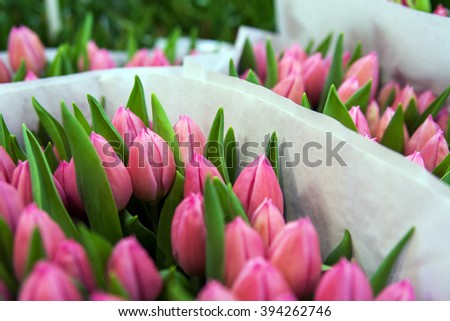 Bunches of Tulips for sale at the famous Bloemenmarket in Amsterdam, Holland - stock photo