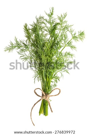 Bundle of dill herb isolated on white background. Food ingredient. Condiment. - stock photo