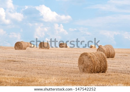 Bundles of straw on the field after harvest. - stock photo