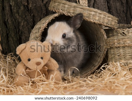 Bunny - stock photo