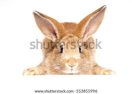 Bunny cute rabbit on the white background