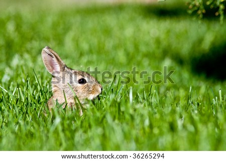 Bunny in the grass - stock photo