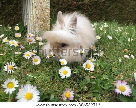 Bunny lion head rabbit enjoy in the garden