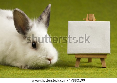 Bunny on table, frame - stock photo
