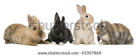 Bunny rabbits sitting in front of white background, studio shot - stock photo