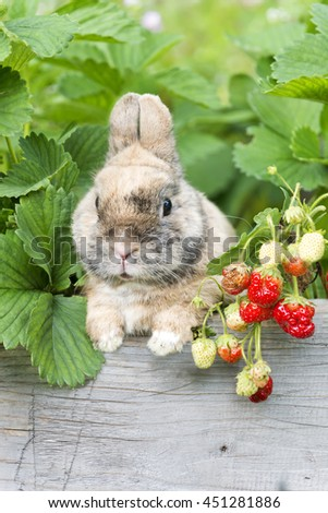 bunny sitting with red strawberries in the garden