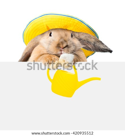 Bunny with hat and watering can and looking over a signboard. Isolated on white background - stock photo