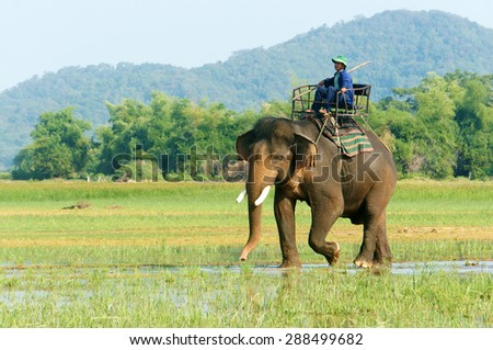 BUON ME THUOT- VIET NAM- JUNE 11: Asia travel in summer vacation at beautiful Vietnamese countryside, traveler travelling by ride elephant in eco tour, green landscape of rural, Vietnam, June 11, 2015