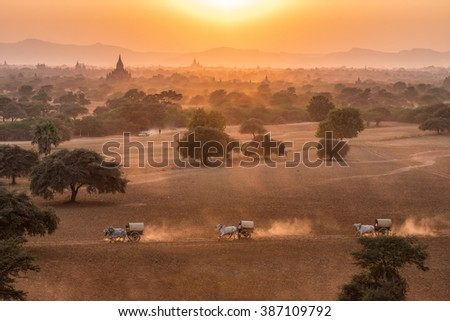 Burmese rural transportation with two white oxen pulling wooden cart on dusty road during sunset in front of pagodas field background at Bagan, Myanmar (Burma). - stock photo