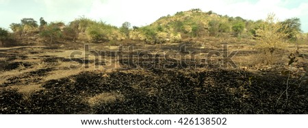 burn with fire ground in wild. scorched dry plains with bushes - stock photo