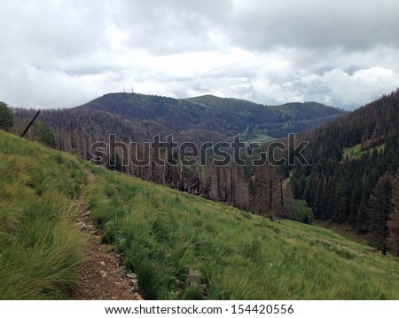 Burned forest near Ski Apache in New Mexico - stock photo