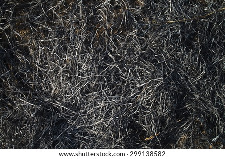 Burned grass on a field - stock photo