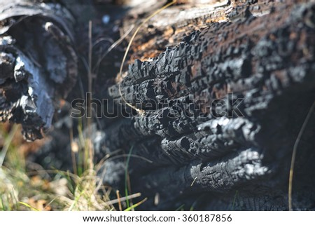 Burned trunk close up with short depth of field - stock photo