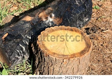 Burned wood and stump - stock photo