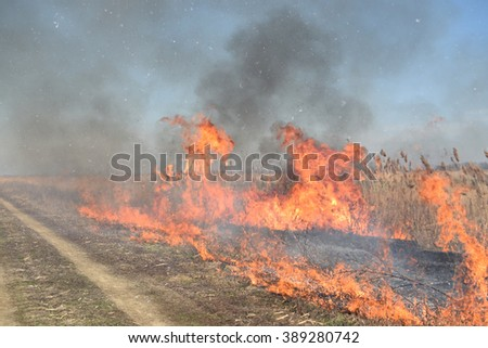 Burning dry grass and reeds. Cleaning the fields and ditches of the thickets of dry grass.