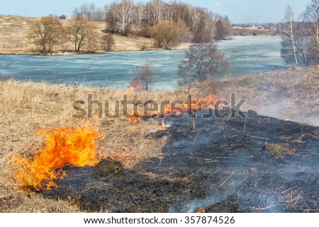 Burning dry last year's grass near the wood. Danger of forest fire - stock photo