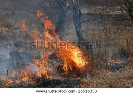 Burning Earth.Fire in the bush. Near Kiev,Ukraine