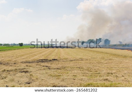 Burning field before planting - stock photo