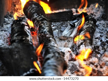 burning firewood in the fire