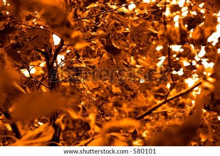 Burning Leaves - stock photo