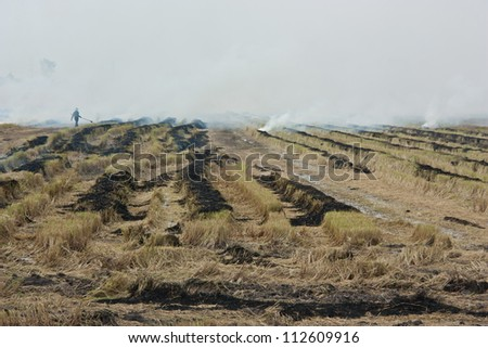 Burning of rice straw. Destructive nature of the agricultural knowledge of the danger. Air pollution can cause damage. Many crop losses. - stock photo