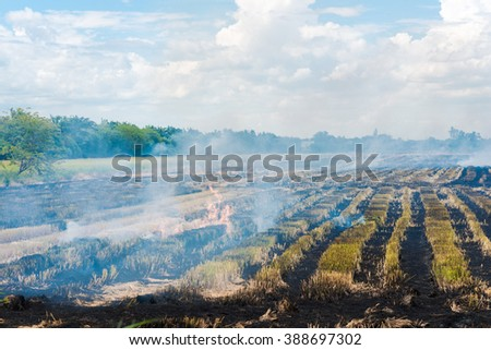 Burning rice field after harvesting,  burning rice straw for farming new rice, Thailand. - stock photo