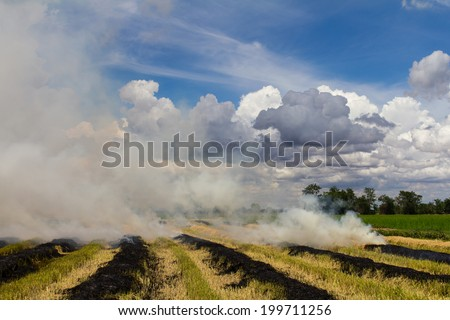 Burning rice stubble may cause smoke pollution is harmful to the environment  - stock photo
