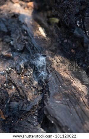 Burning Stump - stock photo