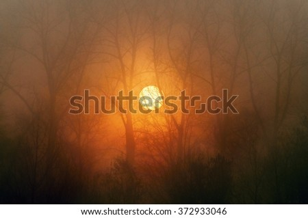Burning sun rises on the background of trees with bare branches - stock photo