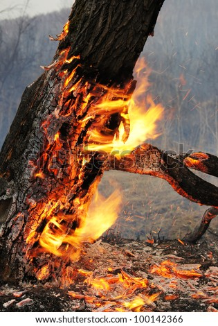 Burning tree - stock photo
