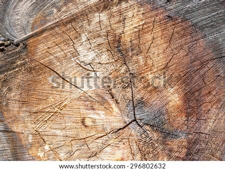 burnt tree ring background - stock photo