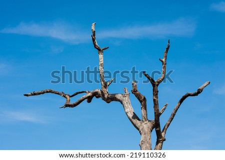 Burnt trees against the blue sky - stock photo