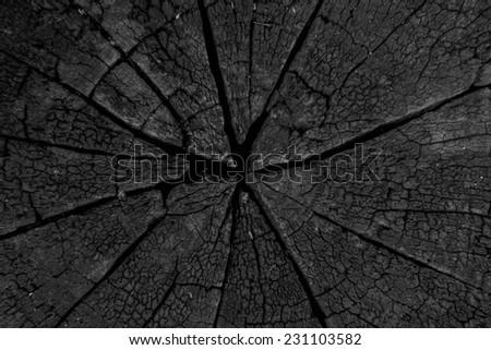 burnt weathered cracked stump  - stock photo