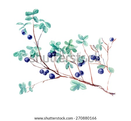 Bush bilberry. Forest miniatures. Watercolor hand drawn illustration - stock photo