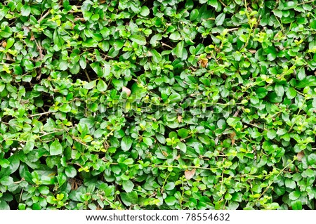Garden Bush Stock Images Royalty Free Images Vectors Shutterstock