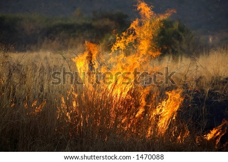 Bush fire, grass burning