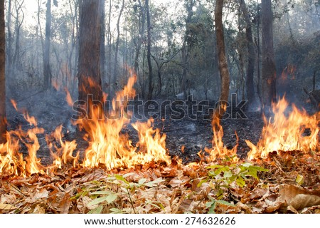 bush fire in tropical forest