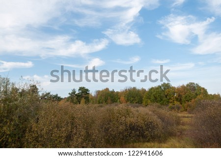 Bush growth under blue sky against thicket background. Nizhegorodsky region, Russia.