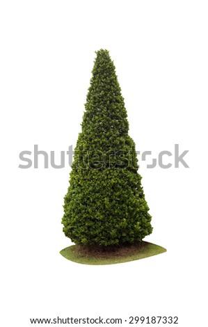 bush isolated on white background - stock photo