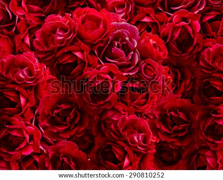 Bush of red rose flowers background - stock photo
