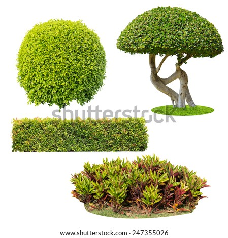bush on white background , isolated - stock photo