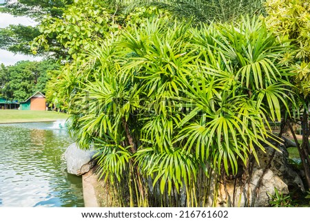 bush palm tree in the park - stock photo