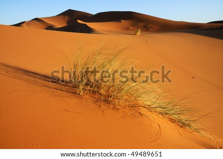 Bush resisting in the dune - stock photo