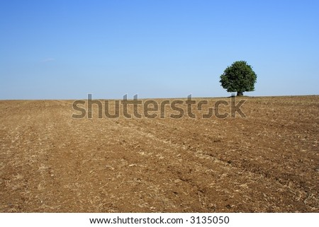 Bush with cloudless sky and ground